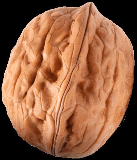 eurocompany nut
